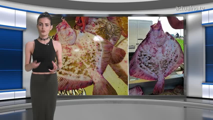 Само 1/3 от рибата в заведенията по морето е българска