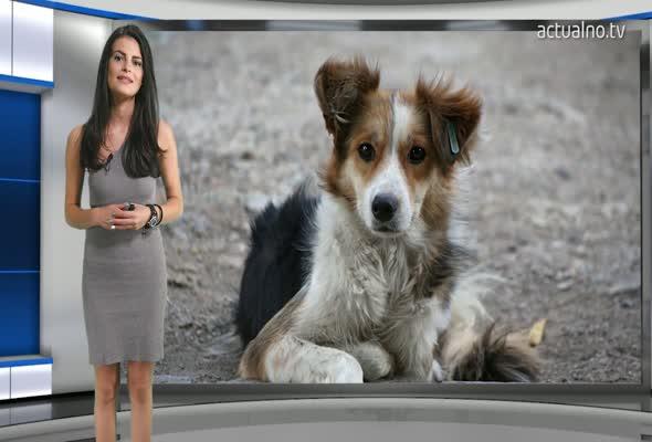 Ужасяващ приют за кучета в Кърджали